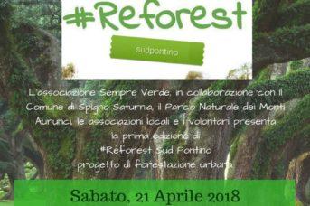 #Reforest sud pontino a Spigno Saturnia