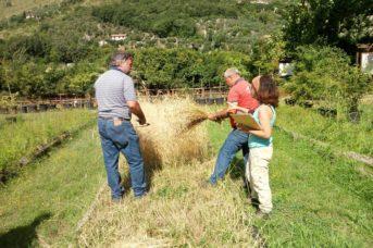 Mietitura tradizionale di grani antichi nel Vivaio del Parco
